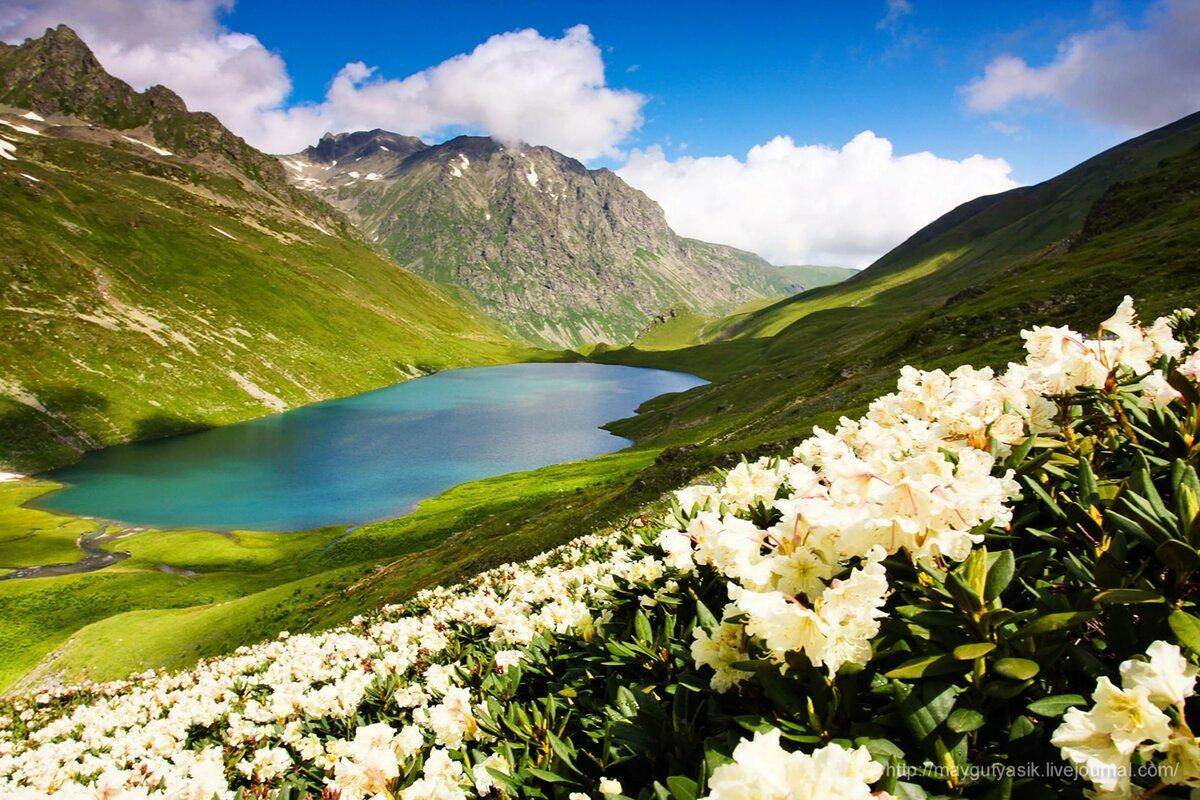 Картинка горы кавказа, открытки дню святого