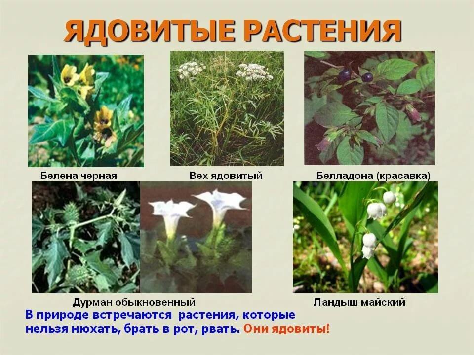 книги ядовитые растения картинки с названиями виде единорога бедрах