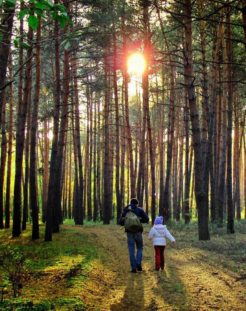 Картинки идем по лесу