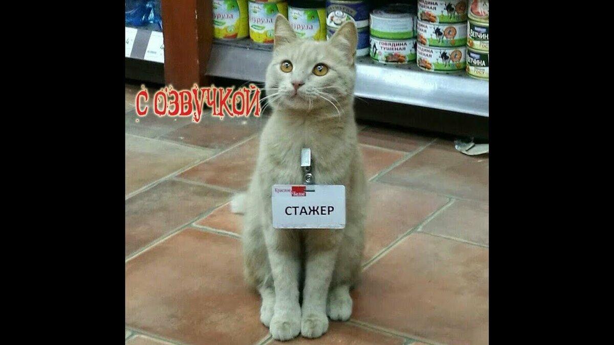 Самые смешные котики до слез с озвучкой, днем медика картинках