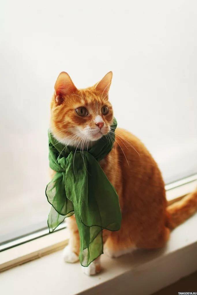 Рыжий кот в зелёном платке сидит на окне - Картинки и аватары
