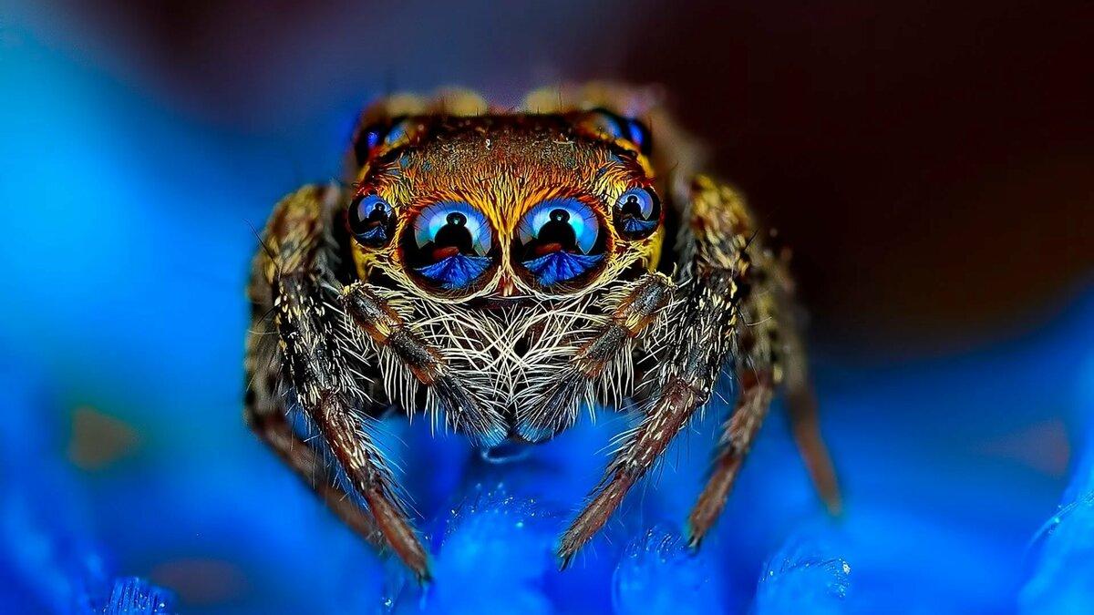 Классные картинки пауков, надписи