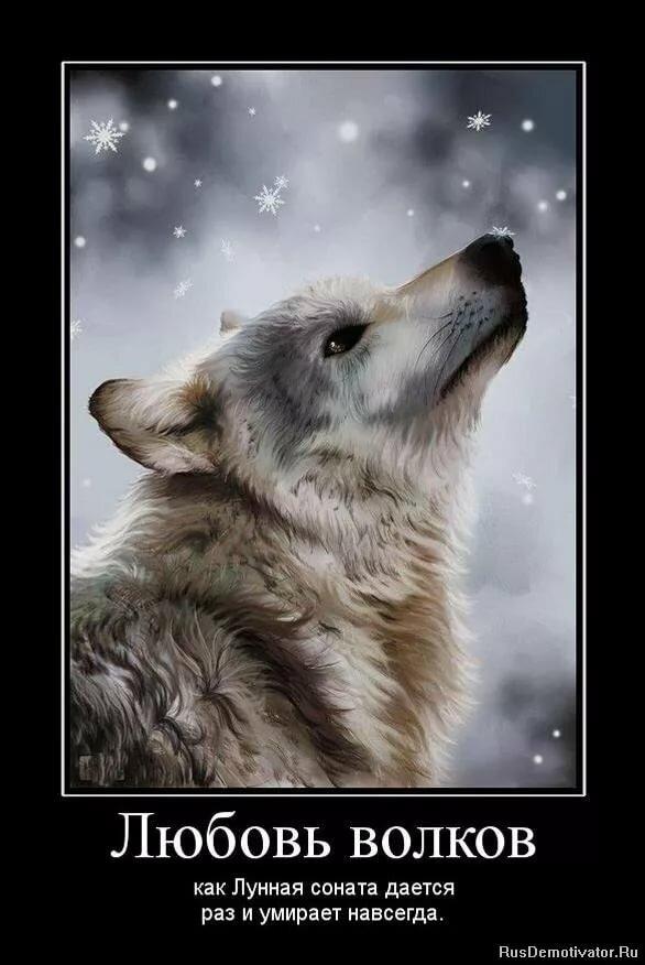 Картинки волк одиночка приколы