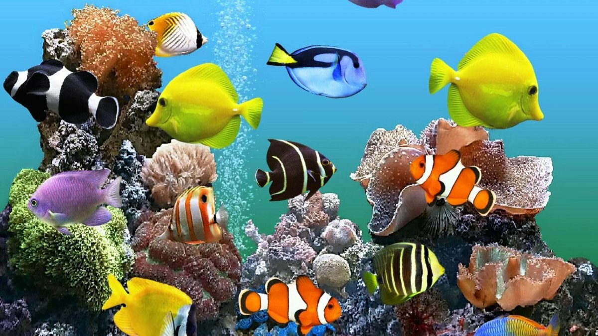 Поздравления для, анимации картинки на рабочий стол аквариум