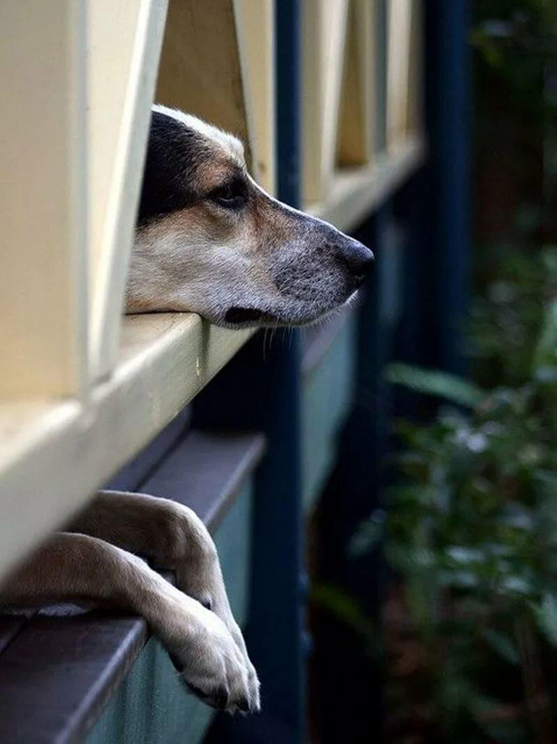 Животные у окна картинка
