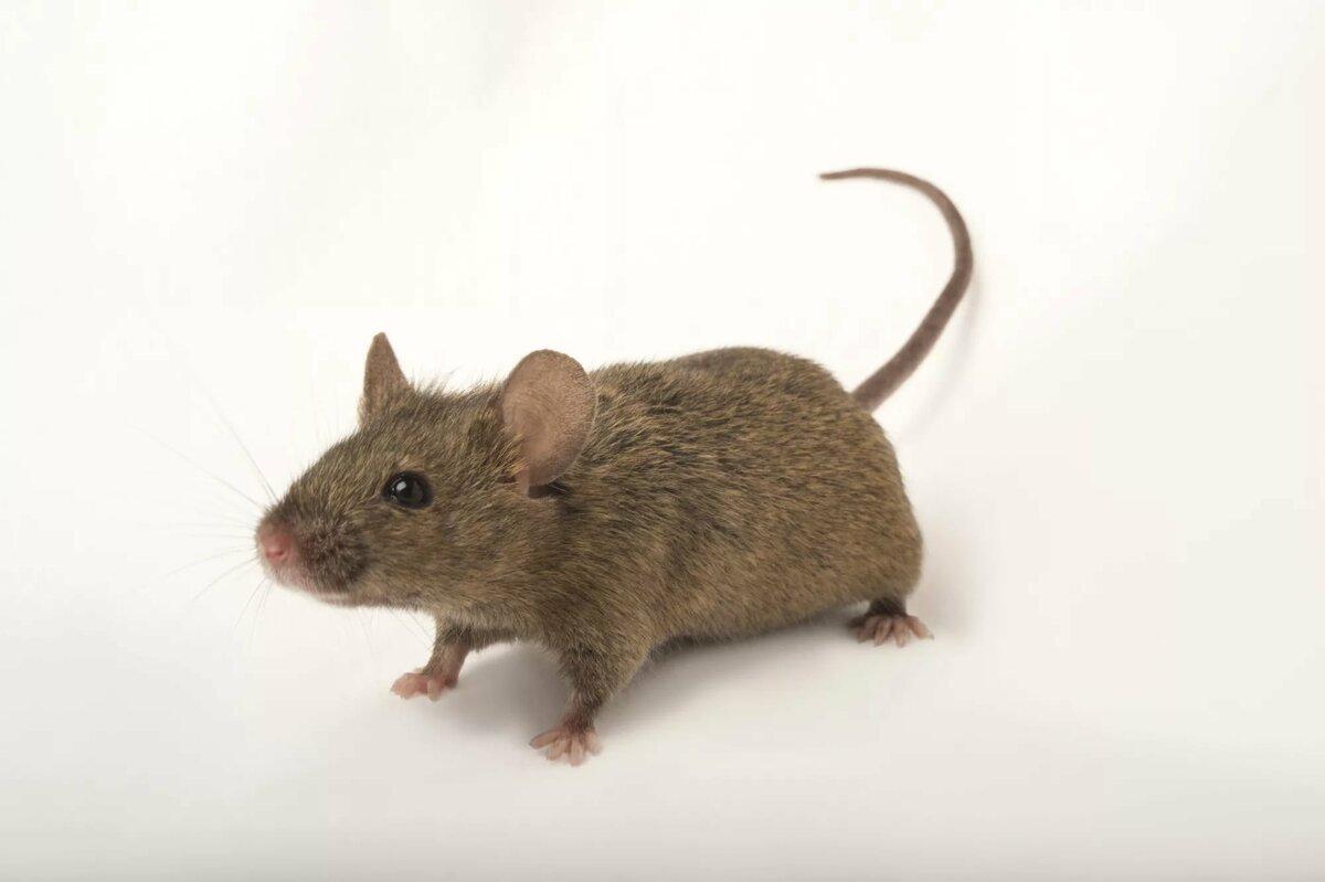 Смотреть мышка картинка