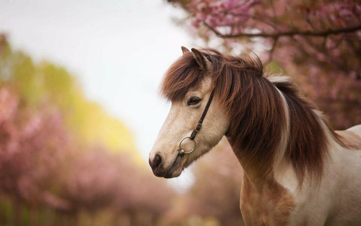 новые красивые картинки с лошадьми выход уделить себе