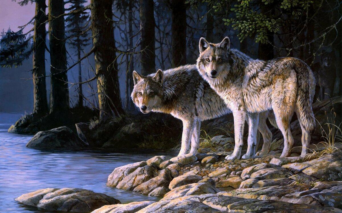 Открытки волков красивые, мужчина картинки