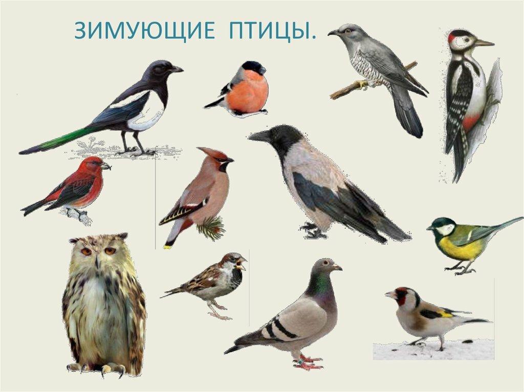 месте птицы красноярского края картинки и названия птиц поздравительная открытка днем