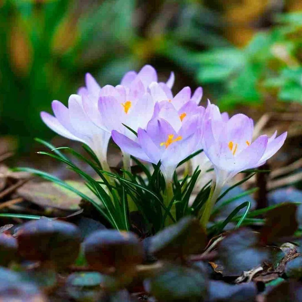 Картинки весна для обоев