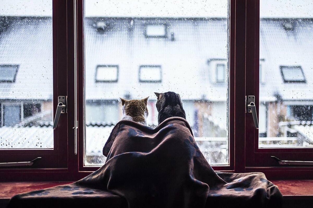 Двое у окна картинки, для любимого
