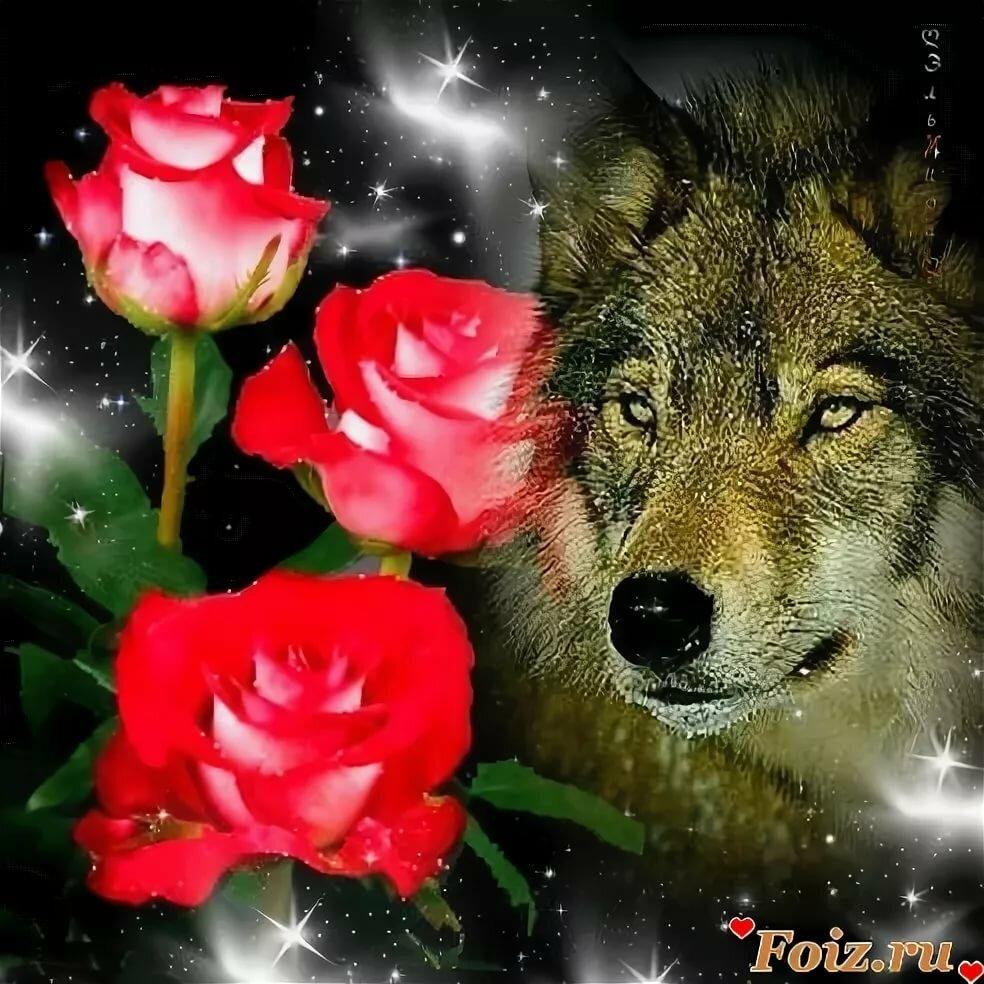 рады фото волка с розой естественно, российских