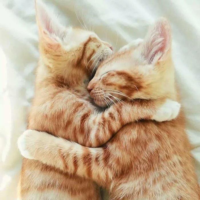 Картинка с добрым утром котики обнимаются, открытки картинки поздравлениями