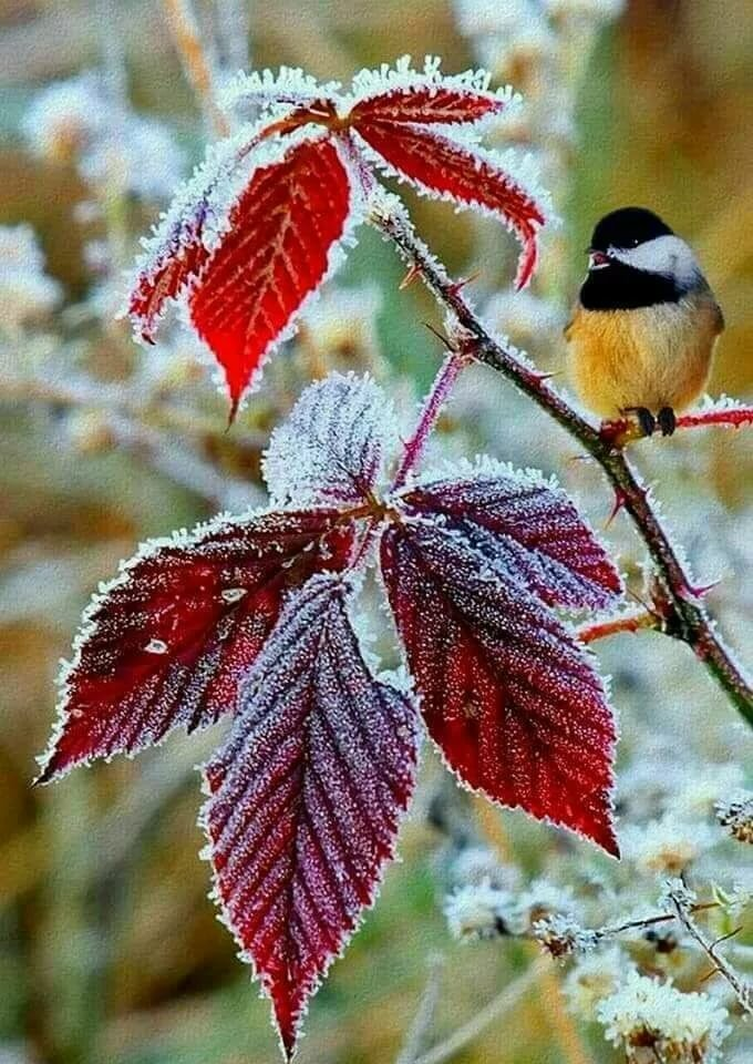 с добрым ноябрьским утром осенне-зимние картинки