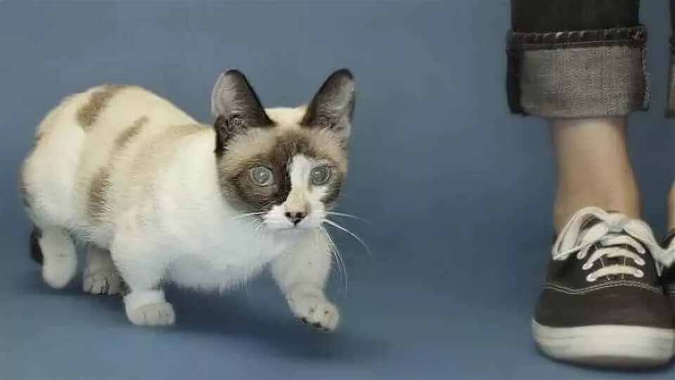 Зубастый кот фото короткорылый глубоководная