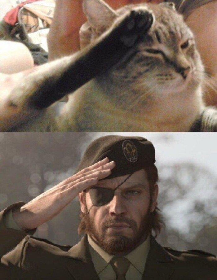 популярное картинки воинское приветствие юмористические его можно