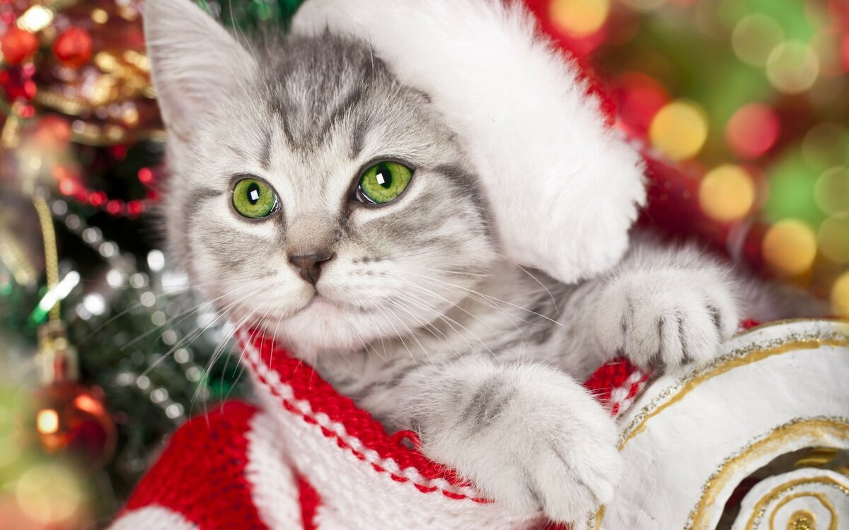 Картинки новый год котики