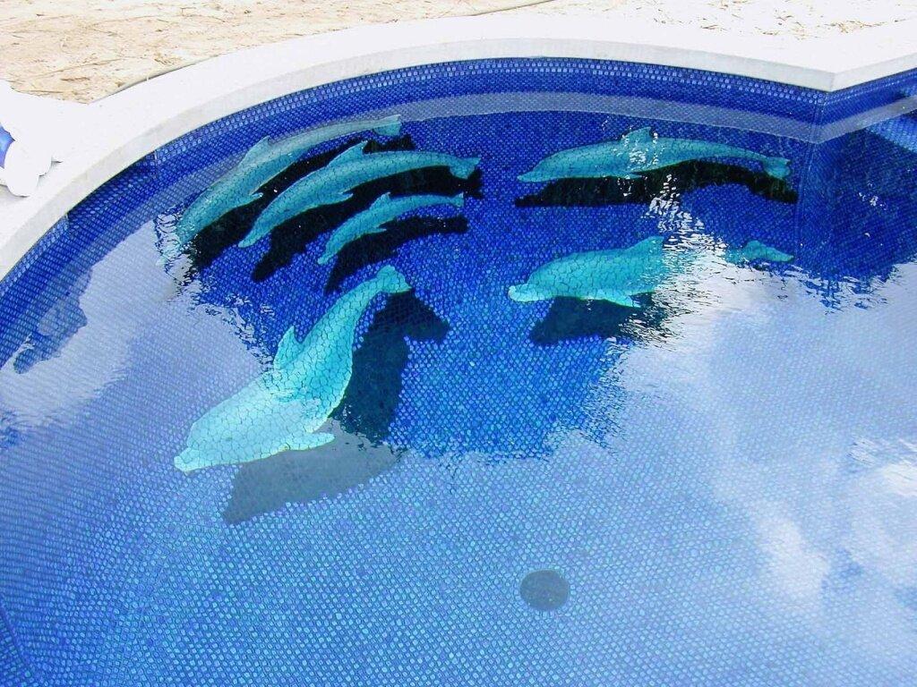 крыльями картинки рыба в бассейне сегодня