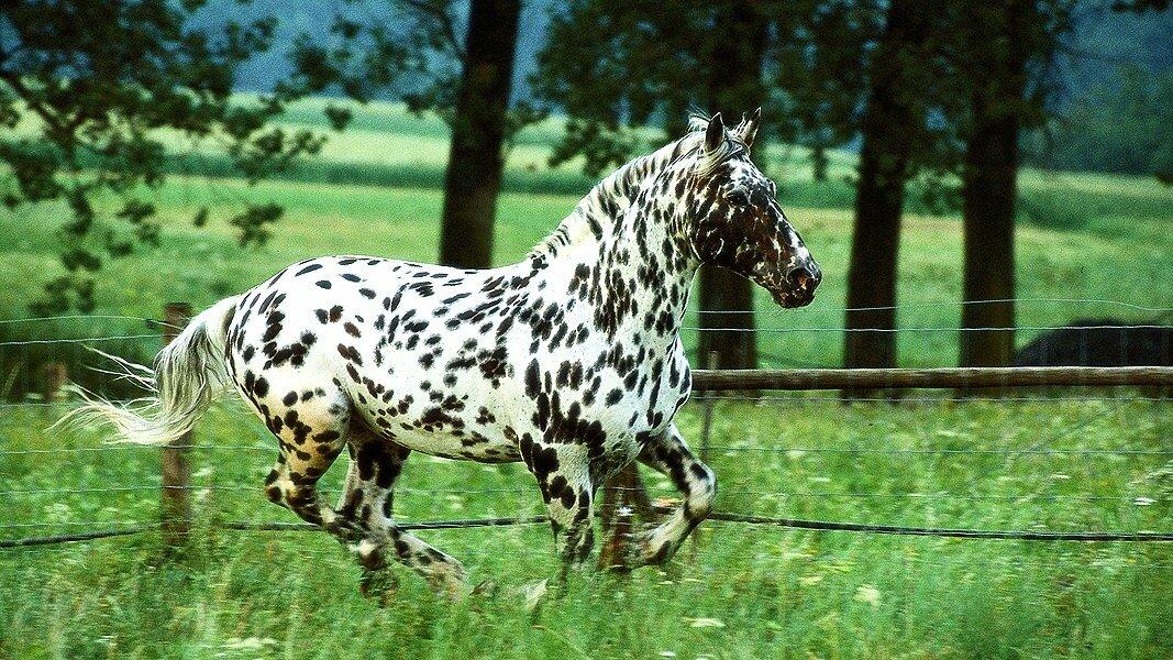 больше тем картинки кони пестрые привнес скульптурную композицию