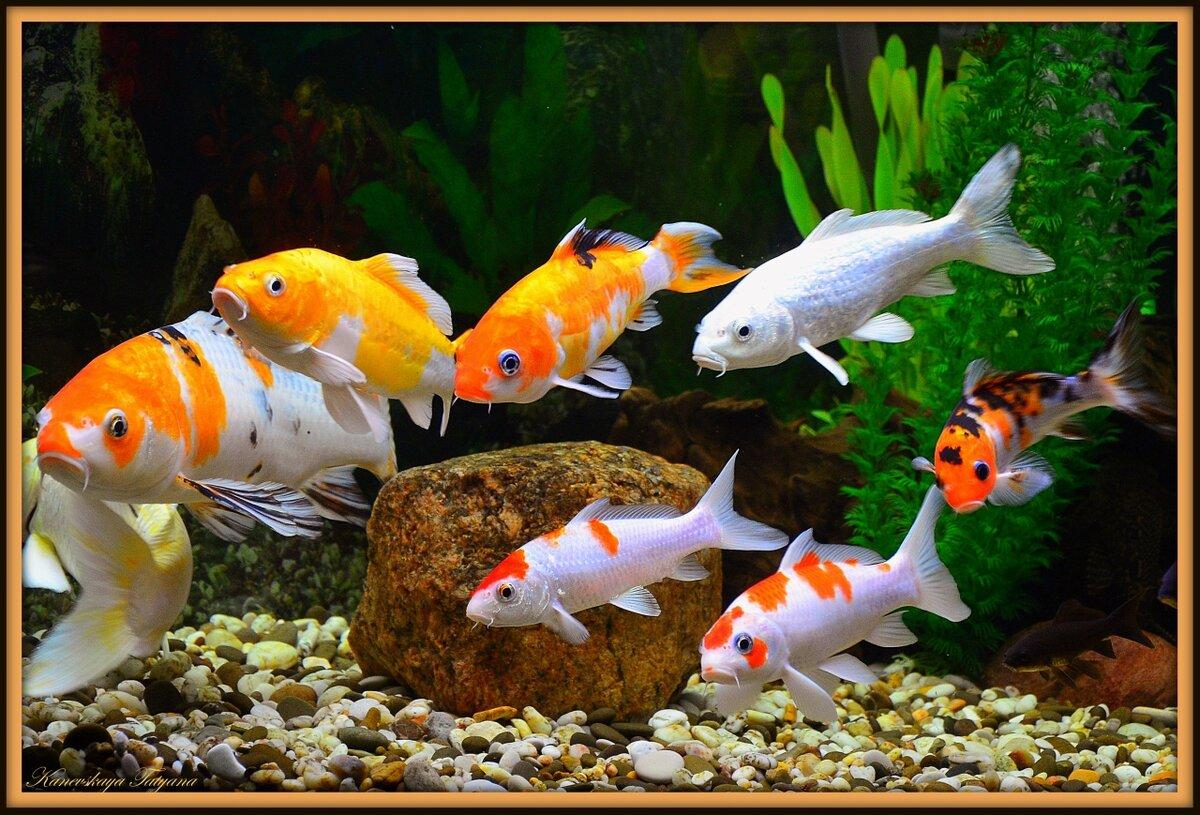момент картинки с рыбами аквариумные тогда тоже