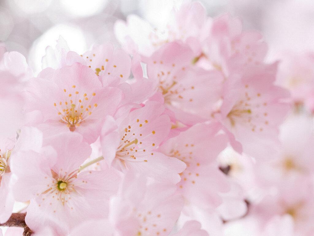 Пройти, картинки нежный цветок