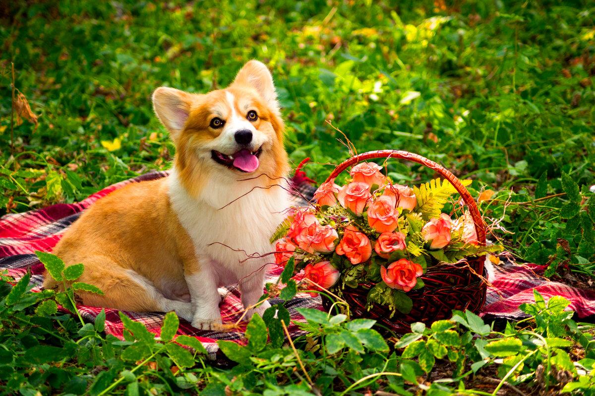 Картинки лето с собаками