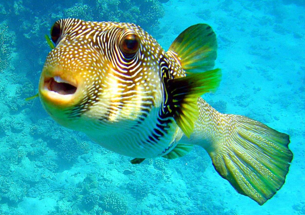 Картинки рыб в мире