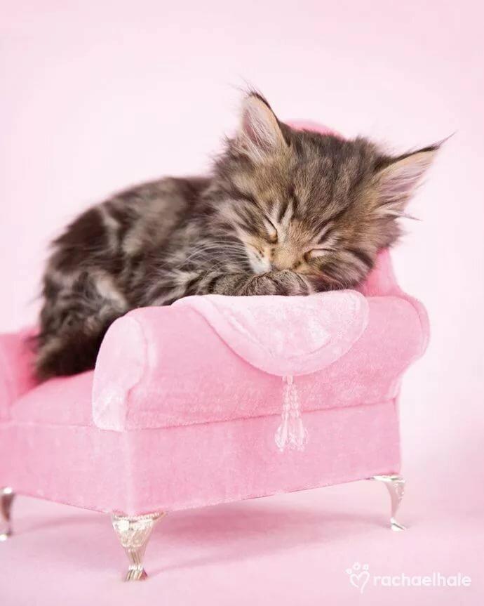 Гифка котята спокойной ночи