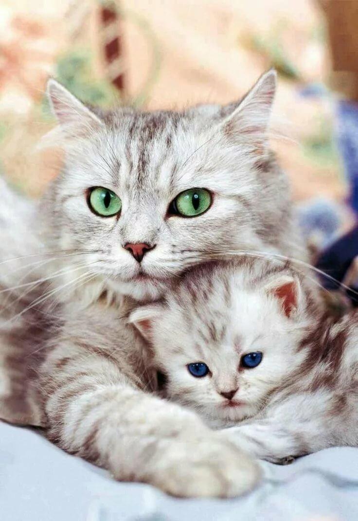 стиль картинка красивая кошка нежная хоть