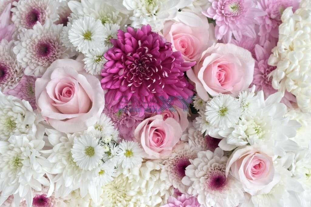 когда-то картинки роз хризантем бывает
