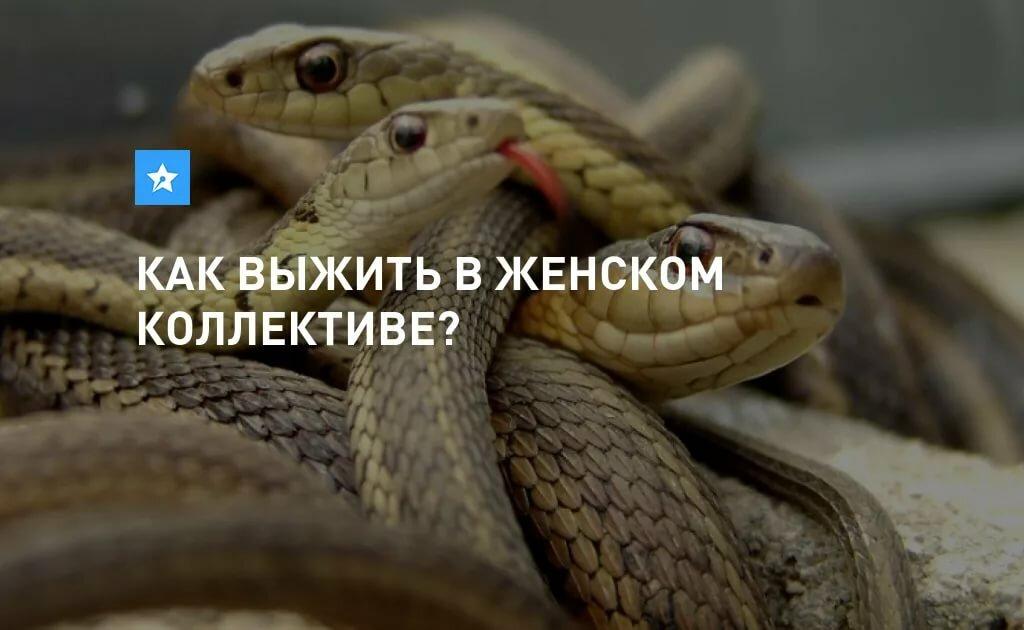 картинка женский коллектив змеи картинки