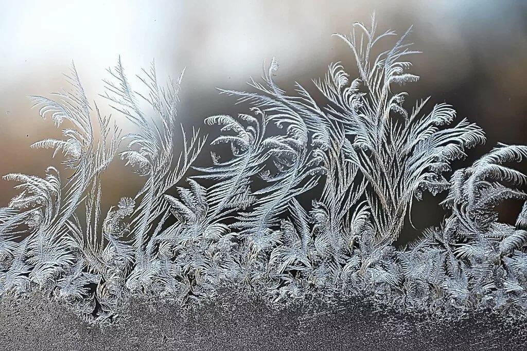 картинки найди животных в морозных узорах каждой