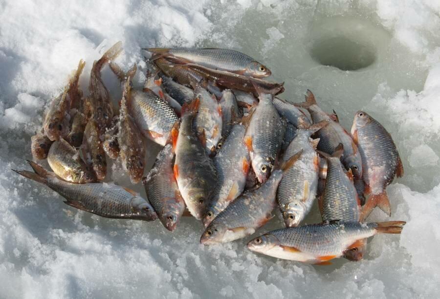 Рыболовный прогноз для населенных пунктов Новосибирской области: