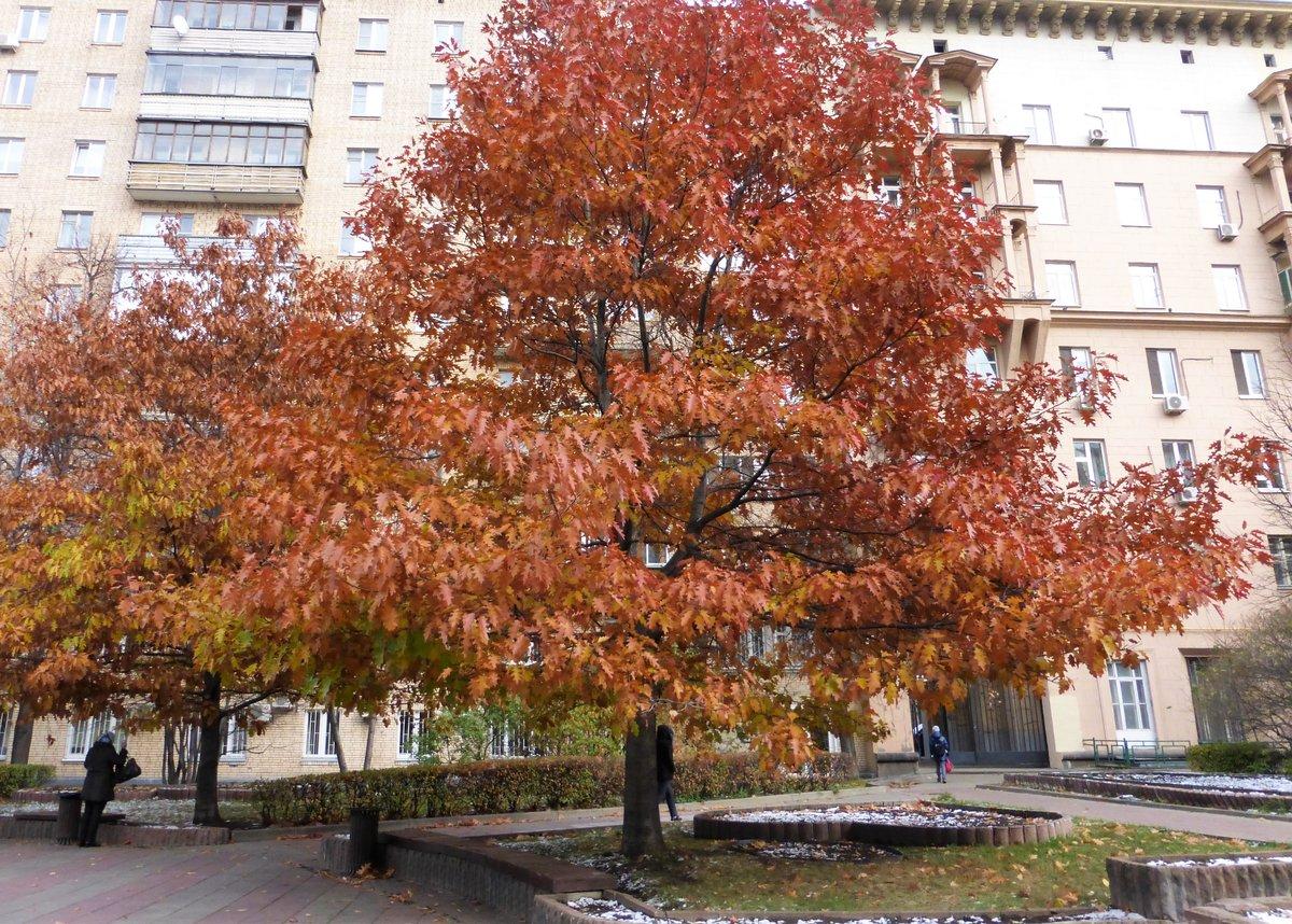 красивые деревья в москве фото концерта анна