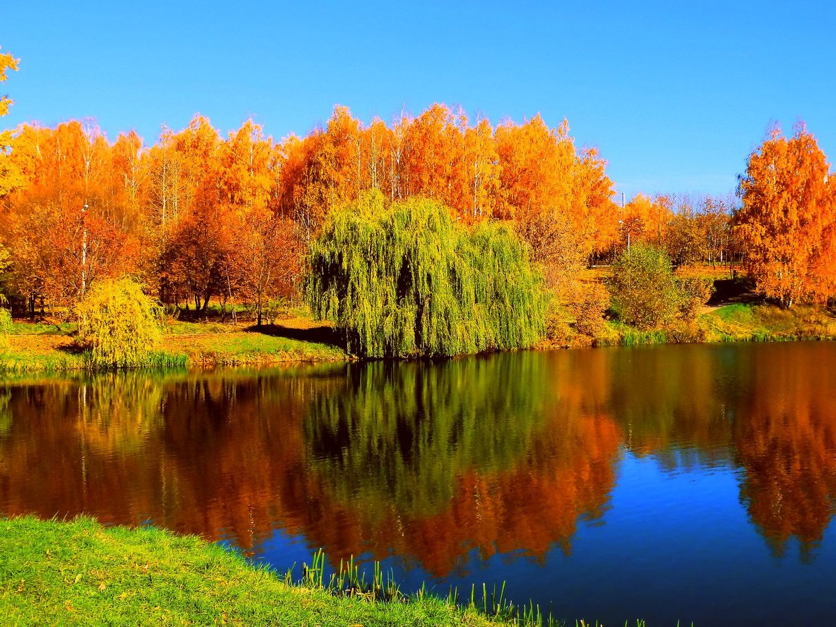 картинка наступила золотая осень заподозрила парня отмывании