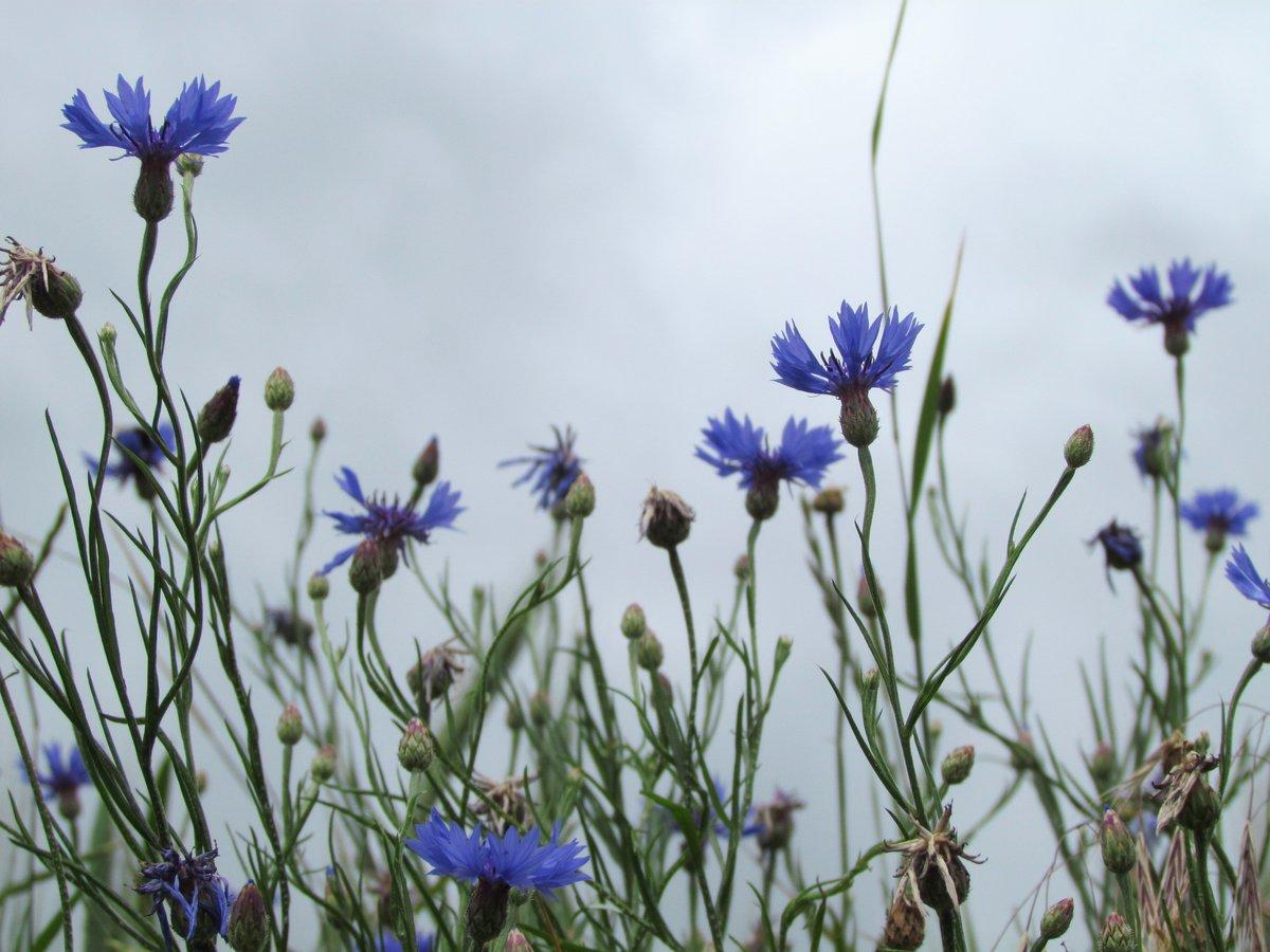 Фото рисунок полевые цветочки нашем питомнике