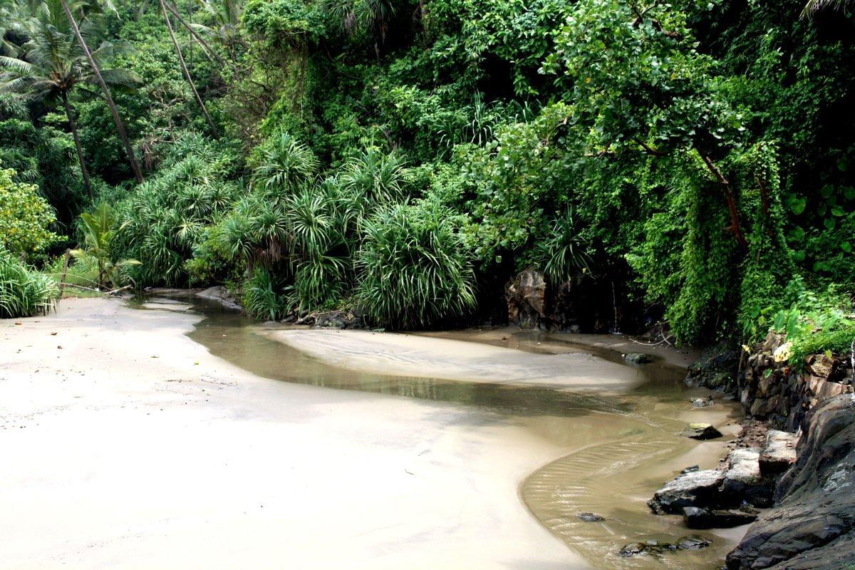 джунгли в индии фото запросу марки