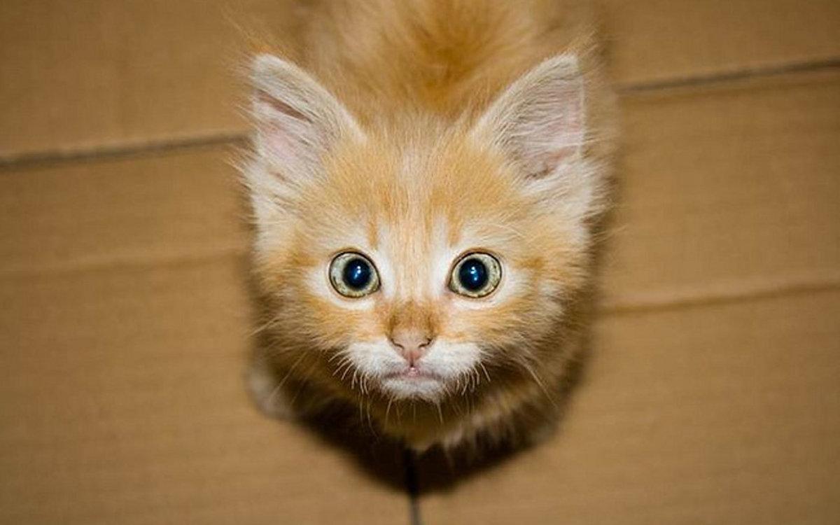 Смешные картинки про кота и котенка, картинки рататуй