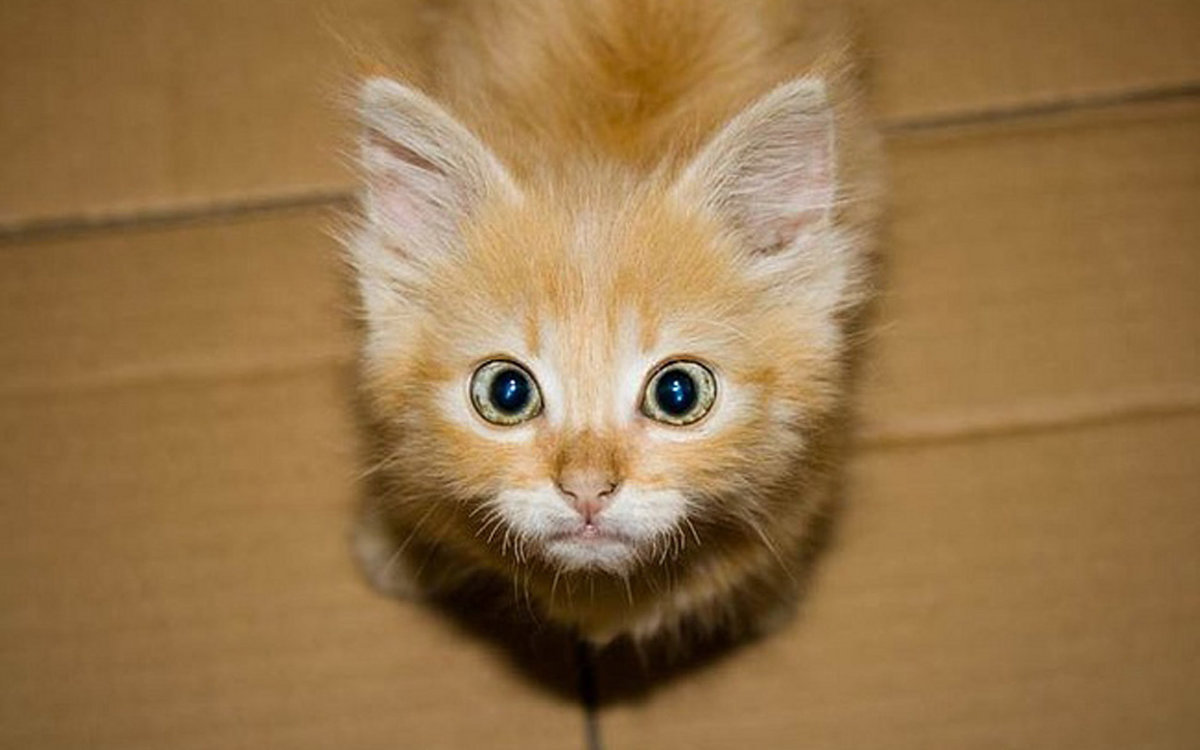 Картинка котят смешных, хочу
