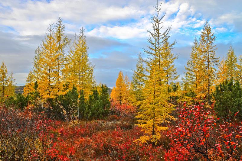 этом способе якутские осенние картинки октября может быть