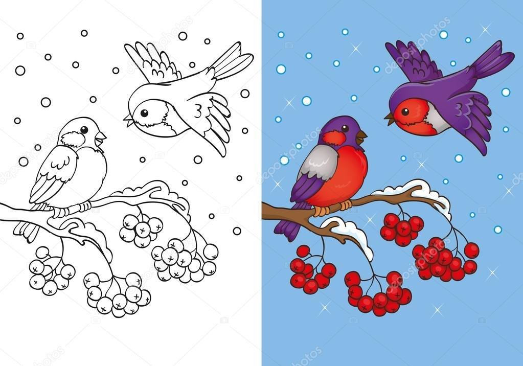 картинки снегирь на ветке рябины для раскрашивания дело