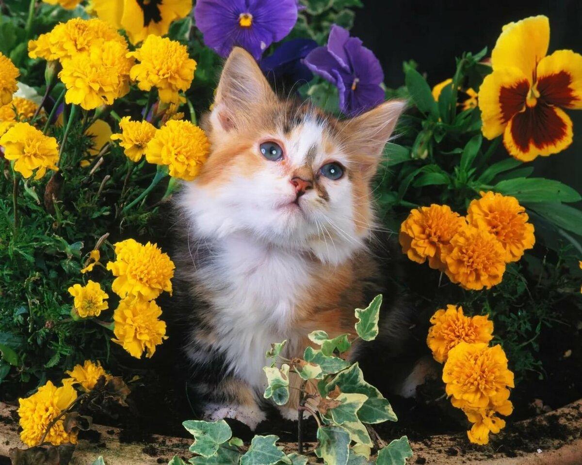 Животные цветы картинки