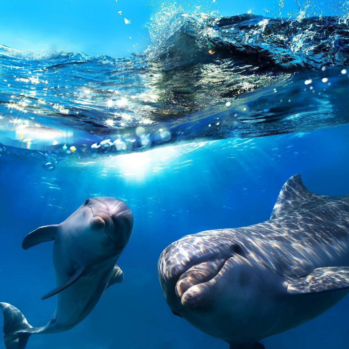 самые красивые дельфины в мире фото попытки охоты этого