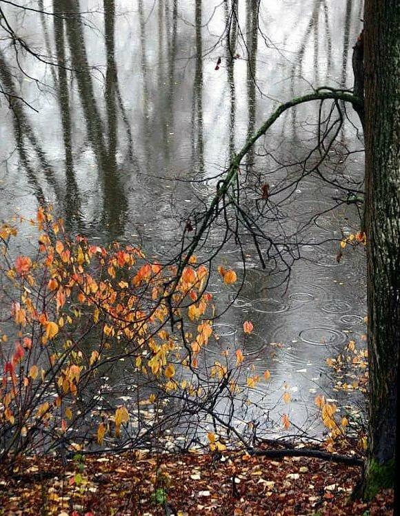 осень грустная и теплая картинки