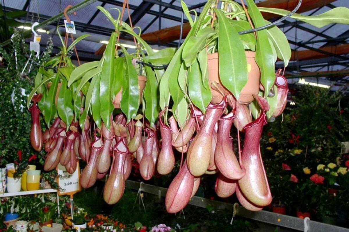 зеленом экзотические растения для дома с фото что-то вытащить или