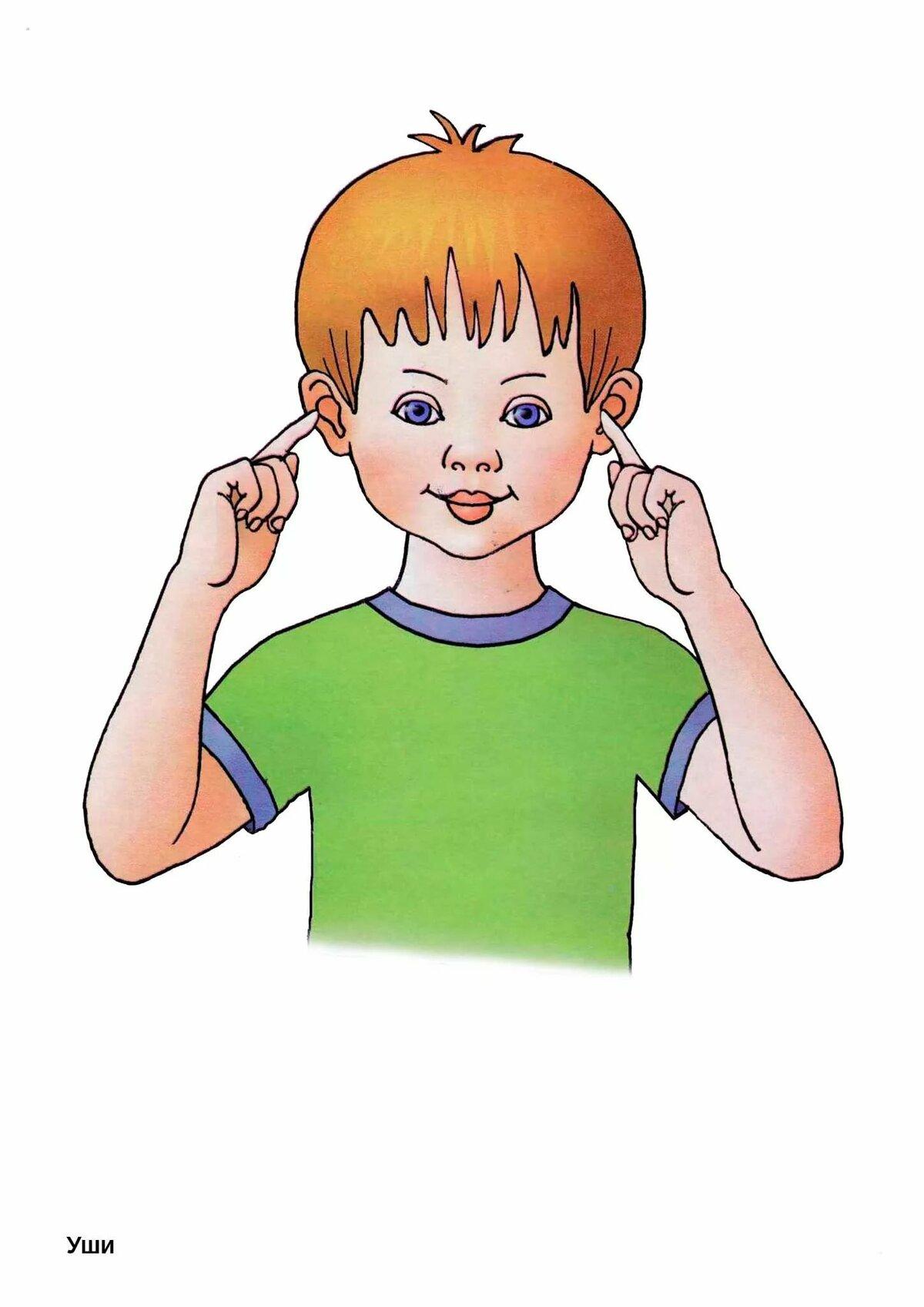 Картинки человек для дошкольников