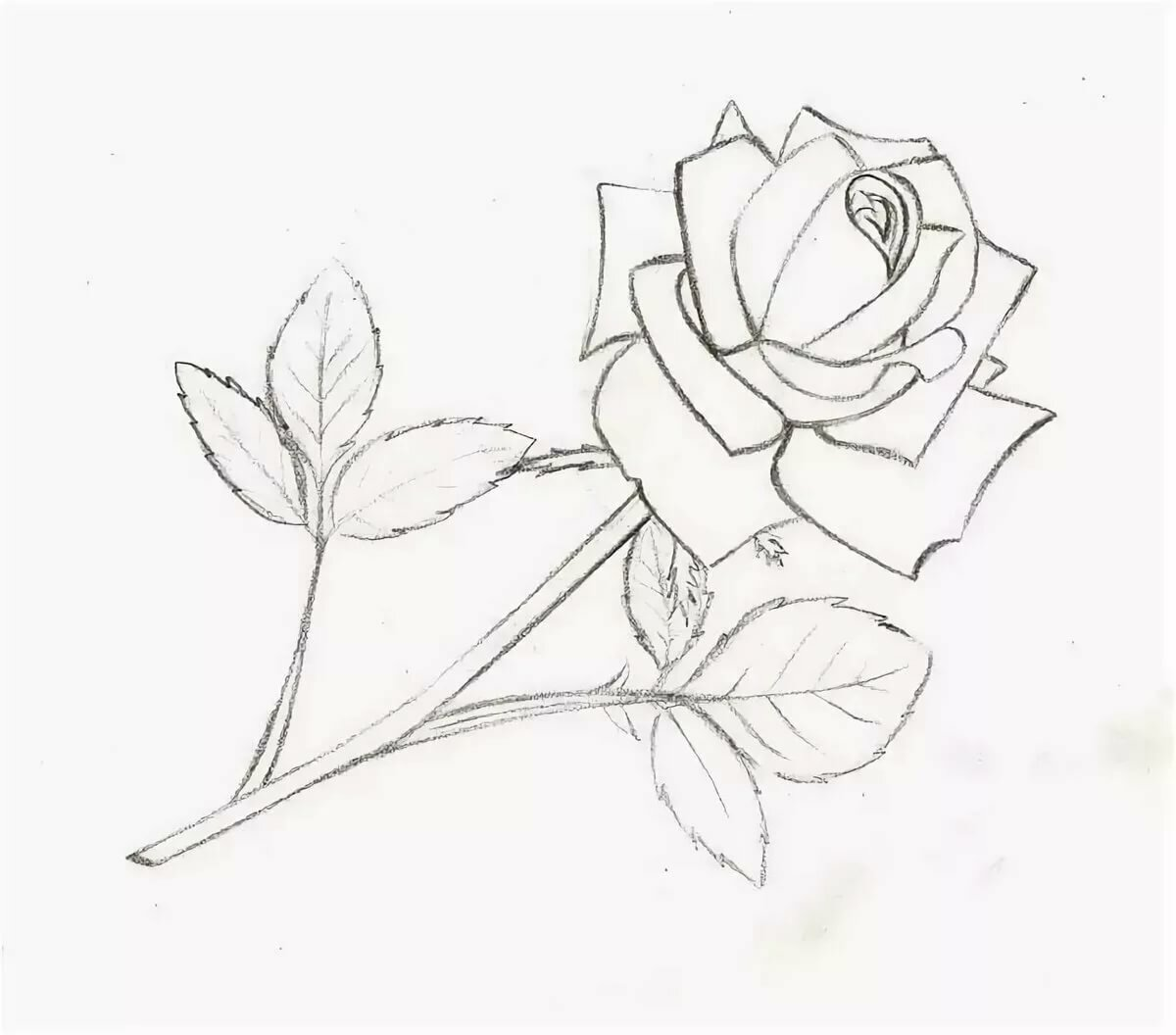 рисунки розы карандашом картинки легкие город был