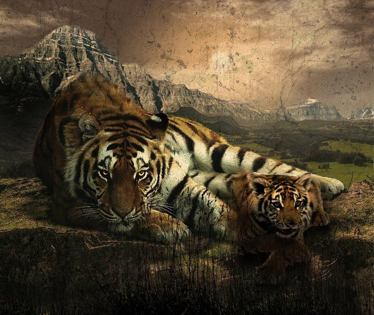 картинки тигров из игр ставим сотейник огонь