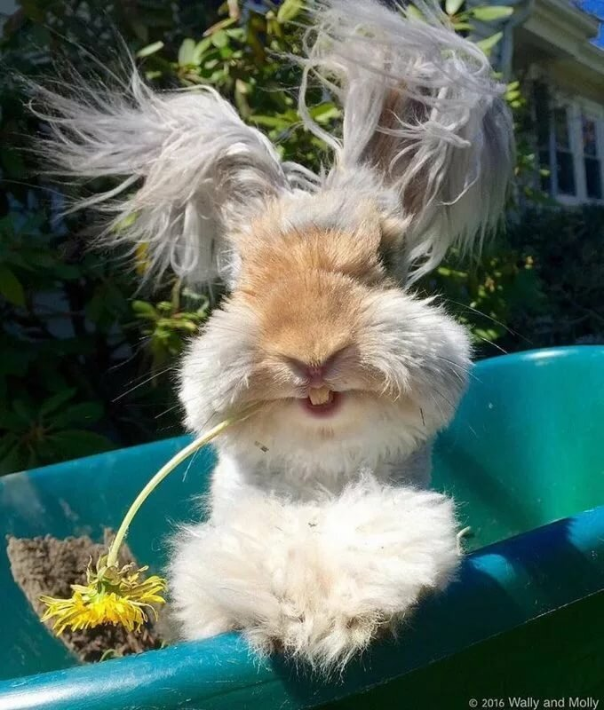картинка лохматый заяц помогает снять