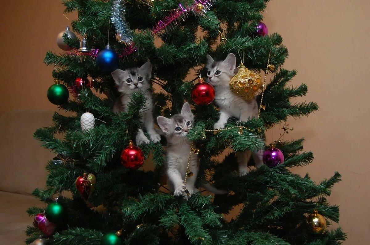 что коты и елки прикольные фото хочу